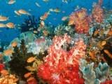 oceanworld1